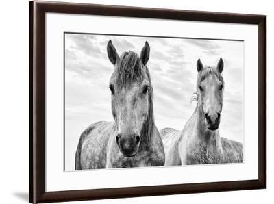White Horses, Camargue, France-Nadia Isakova-Framed Photographic Print