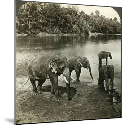 Elephants, Sri Lanka (Ceylo)-Underwood & Underwood-Mounted Photographic Print
