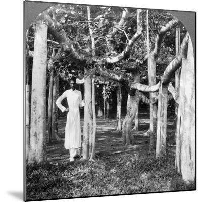 Among the Roots of a Banyan Tree, Calcutta, India, 1900s-Underwood & Underwood-Mounted Photographic Print