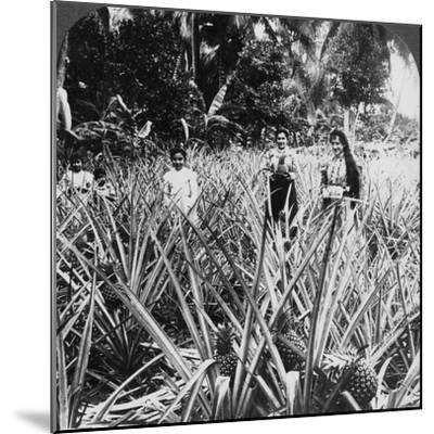 Pineapple Fields, Mayaguez, Puerto Rico-Underwood & Underwood-Mounted Photographic Print