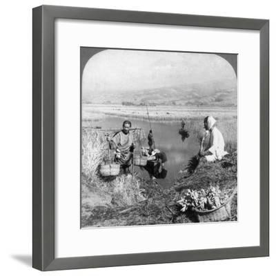 Men Gathering Rushes Near Suzukawa, Fujiyama, Japan, 1904-Underwood & Underwood-Framed Photographic Print