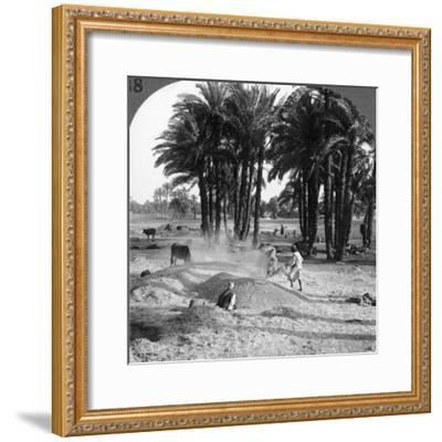 The Winnowing of the Grain after Threshing, Egypt, 1905-Underwood & Underwood-Framed Photographic Print