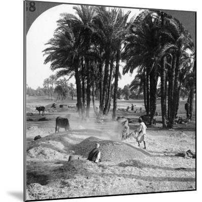 The Winnowing of the Grain after Threshing, Egypt, 1905-Underwood & Underwood-Mounted Photographic Print