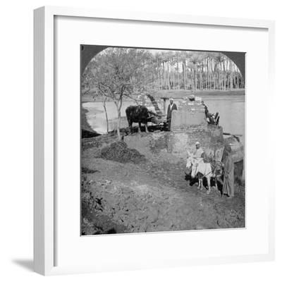 An Egyptian Sakieh, or Ox-Driven Bucket Pump, Egypt, 1905-Underwood & Underwood-Framed Photographic Print