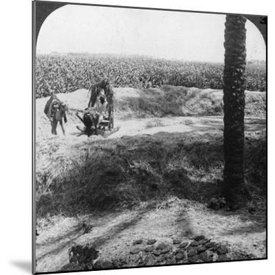 Threshing in Egypt, 1905-Underwood & Underwood-Mounted Photographic Print