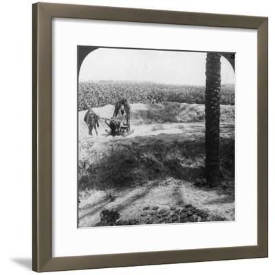Threshing in Egypt, 1905-Underwood & Underwood-Framed Photographic Print