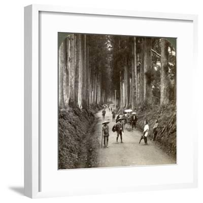The Groves Were God's First Temples, Avenue of Noble Cryptomerias at Nikko, Japan, 1904-Underwood & Underwood-Framed Photographic Print
