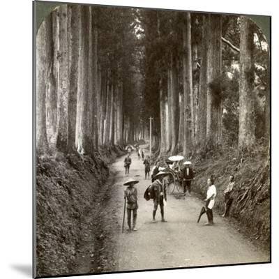 The Groves Were God's First Temples, Avenue of Noble Cryptomerias at Nikko, Japan, 1904-Underwood & Underwood-Mounted Photographic Print