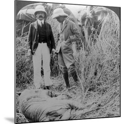 The Dead Maneater, Behar Jungle, India, C1900s-Underwood & Underwood-Mounted Photographic Print