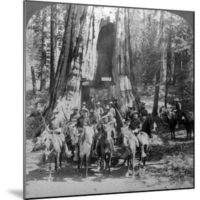 Cavalry Passing Through the Great Tree 'California, California, Usa-Underwood & Underwood-Mounted Photographic Print