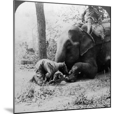 Mahout Removing a Thorn from an Elephant's Foot, Behar Tiger Shoot, India, C1900s-Underwood & Underwood-Mounted Photographic Print