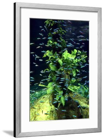Aquarium, Loro Parque, Tenerife, Canary Islands, 2007-Peter Thompson-Framed Photographic Print
