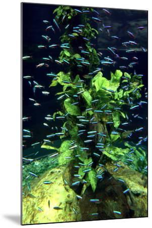 Aquarium, Loro Parque, Tenerife, Canary Islands, 2007-Peter Thompson-Mounted Photographic Print