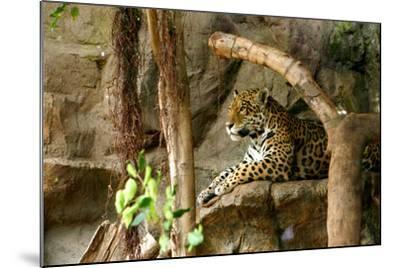 Jaguar, Loro Parque, Tenerife, Canary Islands, 2007-Peter Thompson-Mounted Photographic Print