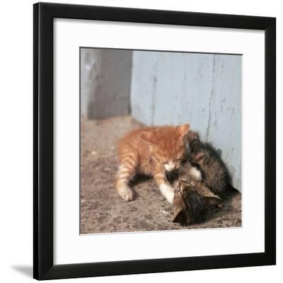 Kittens in Heracleion, Crete-CM Dixon-Framed Photographic Print