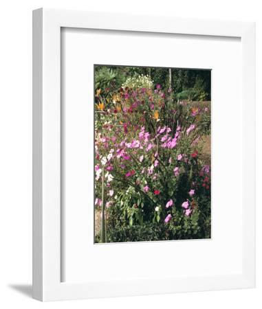 Botanical Gardens, Funchal, Madeira, Portugal-Peter Thompson-Framed Photographic Print