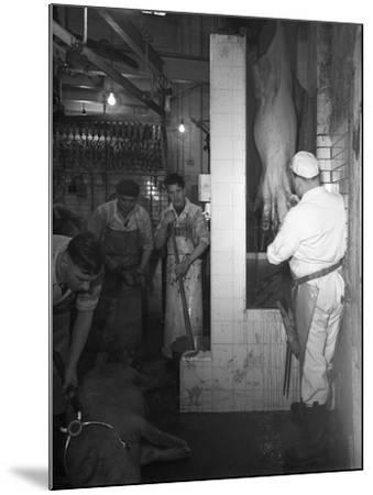 Butchery Factory, Rawmarsh, South Yorkshire, 1955-Michael Walters-Mounted Photographic Print