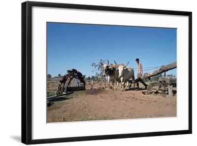 Persian Water Wheel, Rajasthan, India-Vivienne Sharp-Framed Photographic Print