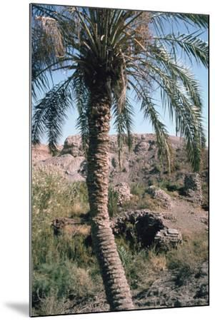 Palm Tree Below Lion of Babylon, Iraq, 1977-Vivienne Sharp-Mounted Photographic Print