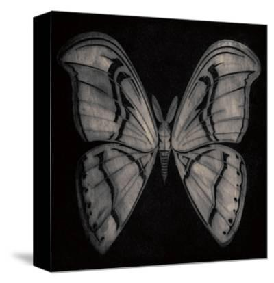 Moth-Barry Goodman-Stretched Canvas Print