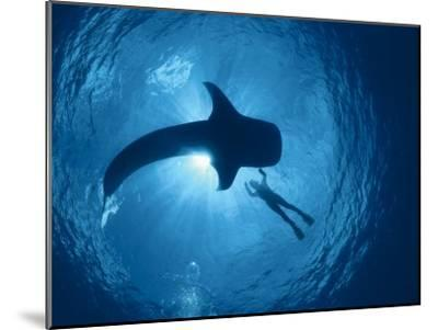 Whale Shark and Person Swimming in Silhouette, Indo Pacific-Jurgen Freund-Mounted Photographic Print