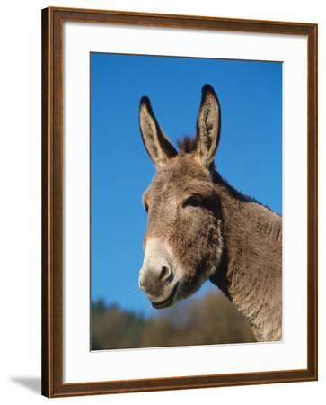 Domestic Donkey Head Portrait, Europe-Reinhard-Framed Photographic Print