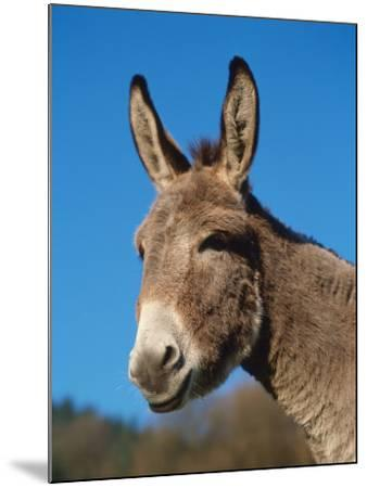 Domestic Donkey Head Portrait, Europe-Reinhard-Mounted Photographic Print