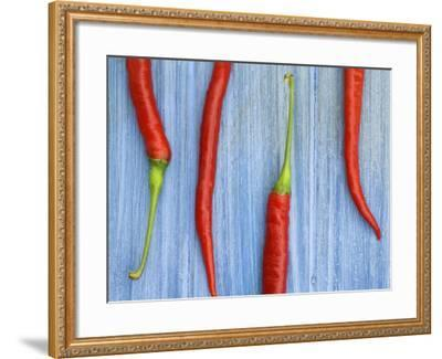 Red Chilli Peppers Chillies Freshly Harvested on Pale Blue Background-Gary Smith-Framed Photographic Print