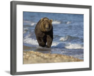 Brown Bear Beside Water, Kronotsky Nature Reserve, Kamchatka, Far East Russia-Igor Shpilenok-Framed Photographic Print