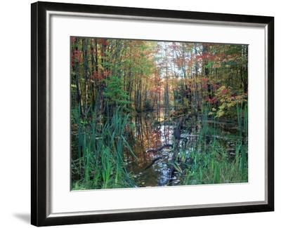 Autumn Scene in Woodland with Stream, Wisconsin, USA-Larry Michael-Framed Photographic Print