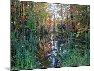 Autumn Scene in Woodland with Stream, Wisconsin, USA-Larry Michael-Mounted Photographic Print