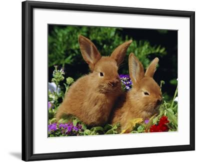 New Zealand Domestic Rabbits and Flowers-Lynn M^ Stone-Framed Photographic Print