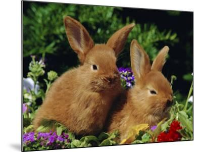 New Zealand Domestic Rabbits and Flowers-Lynn M^ Stone-Mounted Photographic Print