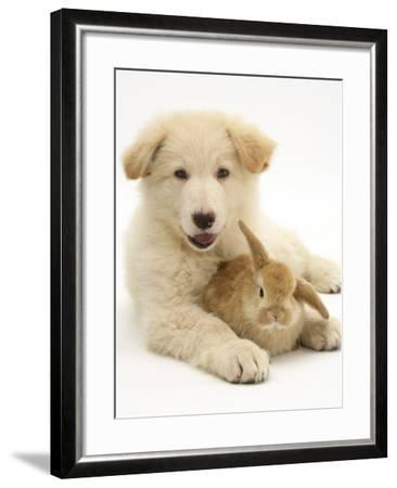 Domestic Puppy (Canis Familiaris) with Bunny-Jane Burton-Framed Photographic Print