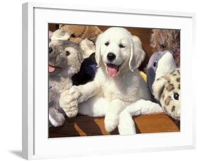 Golden Retriever Puppy with Toys-Lynn M^ Stone-Framed Photographic Print
