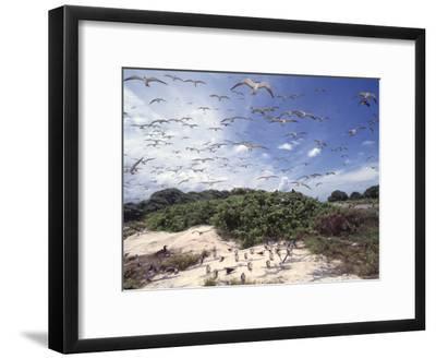 Tern Colony on Tubbataha Reef Philippines-Jurgen Freund-Framed Photographic Print