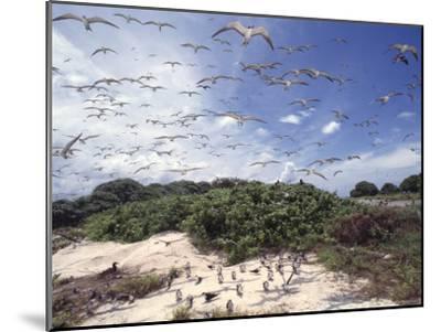 Tern Colony on Tubbataha Reef Philippines-Jurgen Freund-Mounted Photographic Print