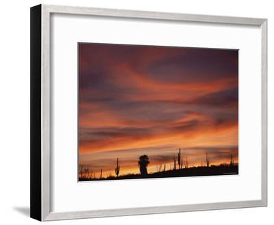 Cardon Cactus and Palm Tree Silhouette at Sunset, Baja California, Mexico-Jurgen Freund-Framed Photographic Print