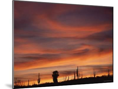 Cardon Cactus and Palm Tree Silhouette at Sunset, Baja California, Mexico-Jurgen Freund-Mounted Photographic Print