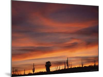 Cardon Cactus and Palm Tree Silhouette at Sunset, Baja California, Mexico-Jurgen Freund-Mounted Photographic Print