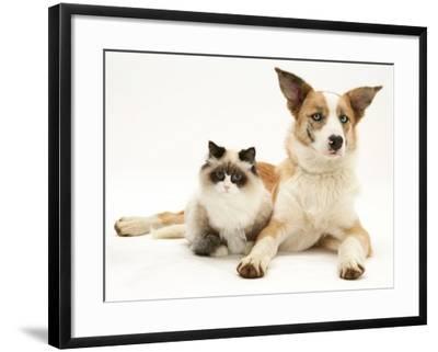 Fluffy Kitten Cuddled up with Dog-Jane Burton-Framed Photographic Print