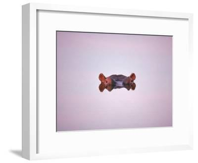 Hippopotamus Submerged, Eyes and Ears Just Above Water.Kruger National Park, South Africa-Tony Heald-Framed Photographic Print