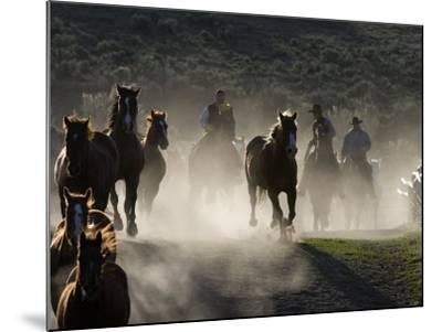 Cowboys Driving Horses at Sombrero Ranch, Craig, Colorado, USA-Carol Walker-Mounted Photographic Print