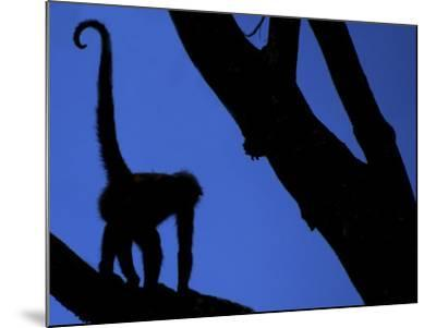 Silhouette of Black-Handed Spider Monkey Standing in Tree, Costa Rica-Edwin Giesbers-Mounted Photographic Print