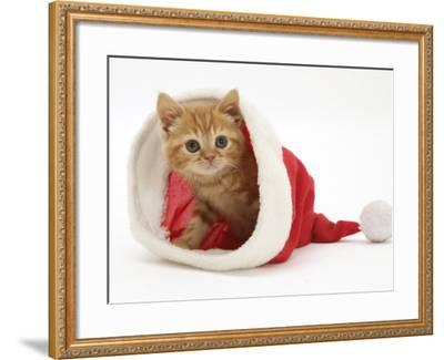 Red Tabby Kitten in a Father Christmas Hat-Jane Burton-Framed Photographic Print
