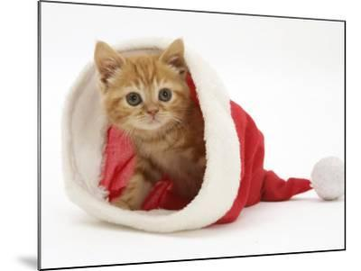 Red Tabby Kitten in a Father Christmas Hat-Jane Burton-Mounted Photographic Print