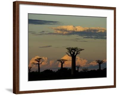 Baobab Trees in Baobabs Avenue, Near Morondava, West Madagascar-Inaki Relanzon-Framed Photographic Print