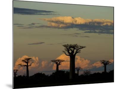 Baobab Trees in Baobabs Avenue, Near Morondava, West Madagascar-Inaki Relanzon-Mounted Photographic Print
