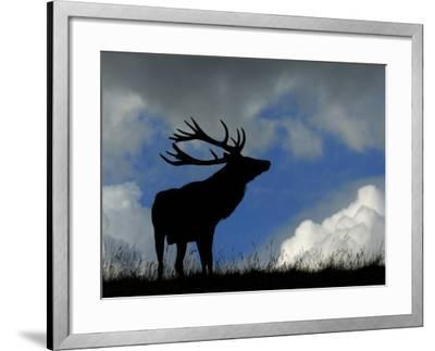 Silhouette of Red Deer Stag, Dyrehaven, Denmark-Edwin Giesbers-Framed Photographic Print