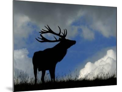 Silhouette of Red Deer Stag, Dyrehaven, Denmark-Edwin Giesbers-Mounted Photographic Print